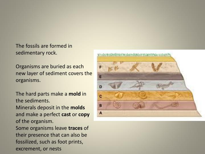 The fossils are formed in sedimentary rock.