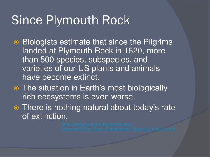 Since Plymouth Rock