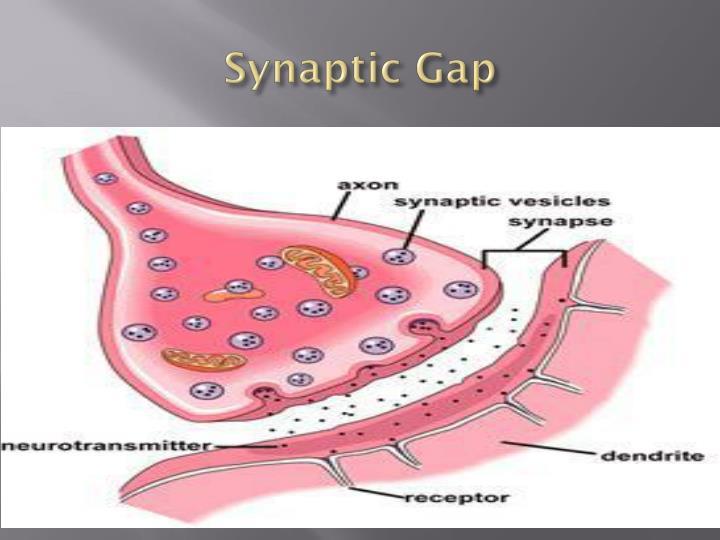Synaptic Gap