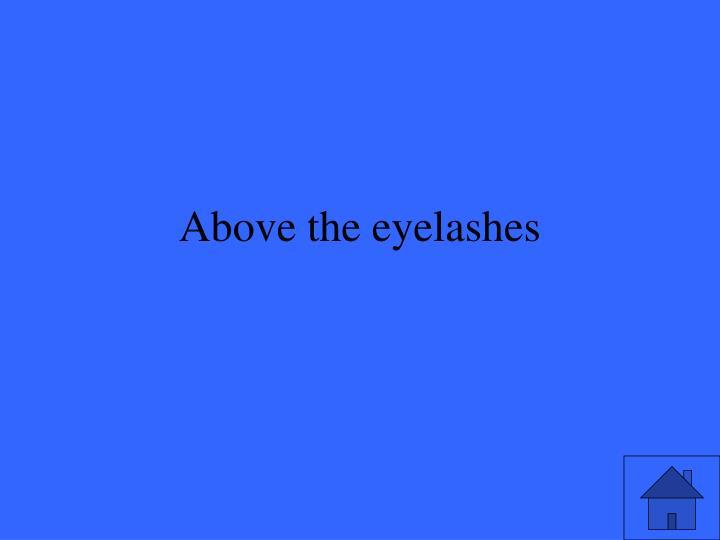 Above the eyelashes