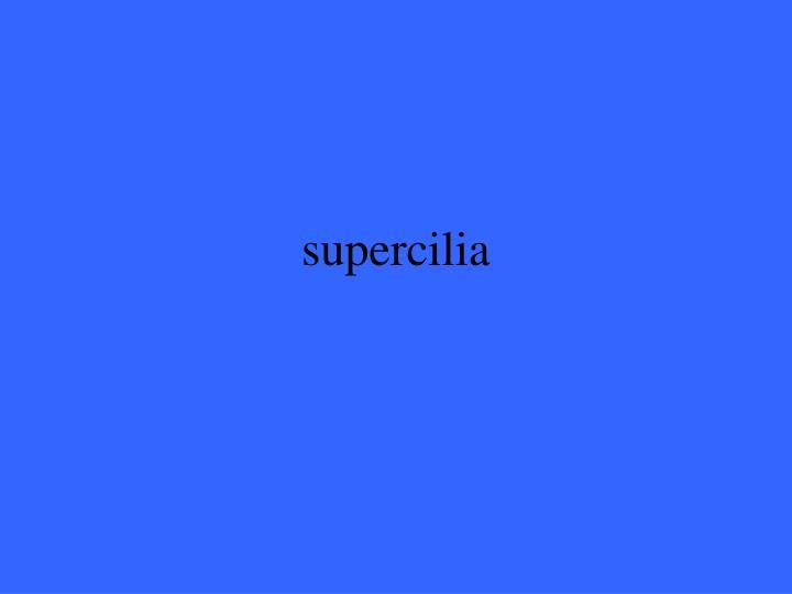supercilia