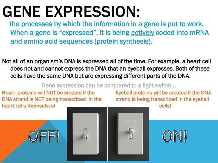 GENE EXPRESSION: