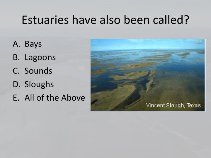Estuaries have also been called?