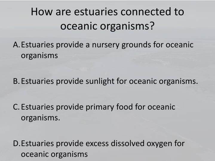 How are estuaries connected to oceanic organisms?