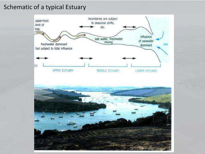 Schematic of a typical Estuary