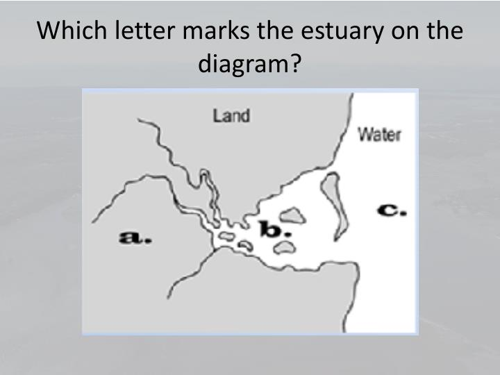 Which letter marks the estuary on the diagram?