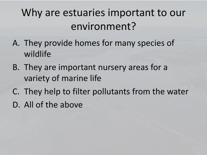 Why are estuaries important to our environment?