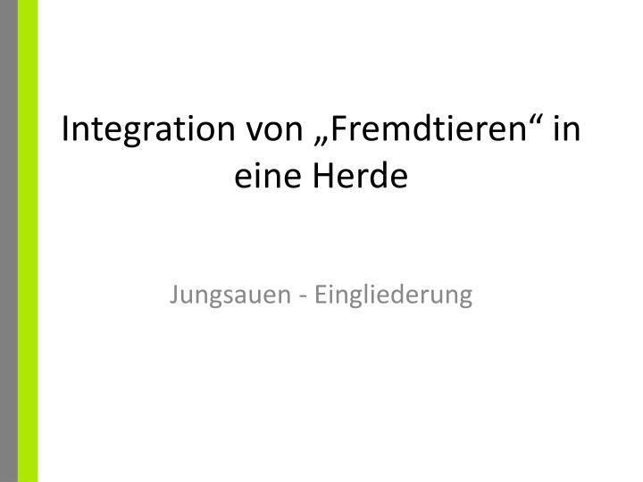 """Integration von """"Fremdtieren"""" in eine Herde"""