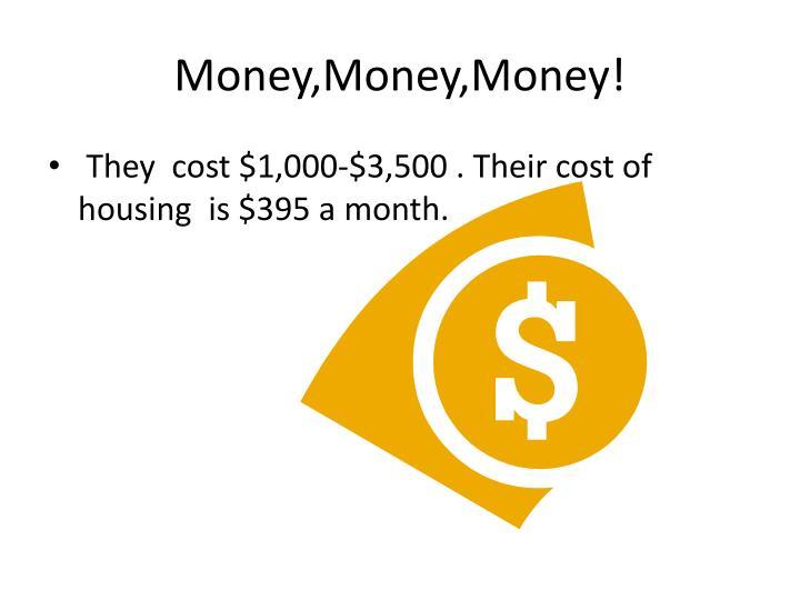 Money,Money,Money!