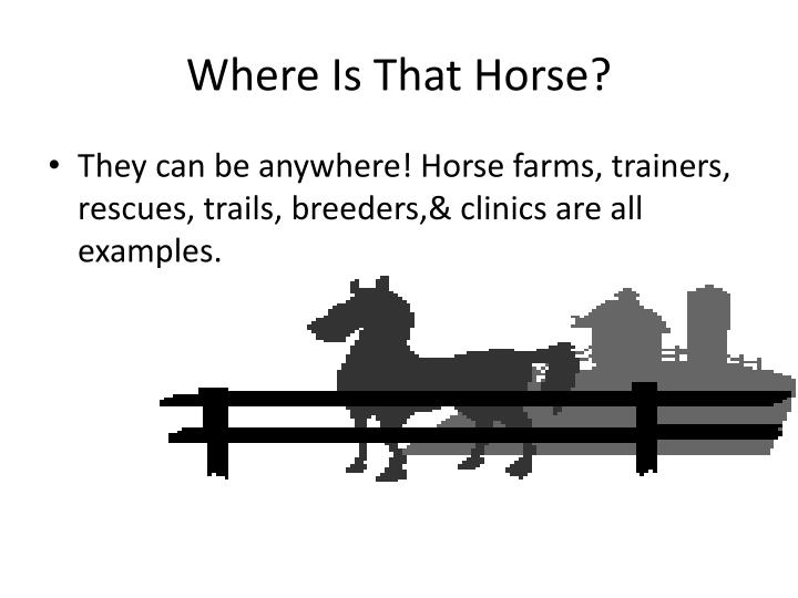 Where Is That Horse?