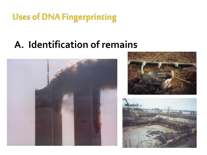 Uses of DNA Fingerprinting
