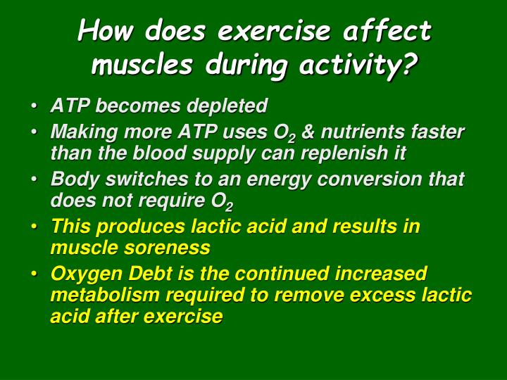 How does exercise affect muscles during activity?