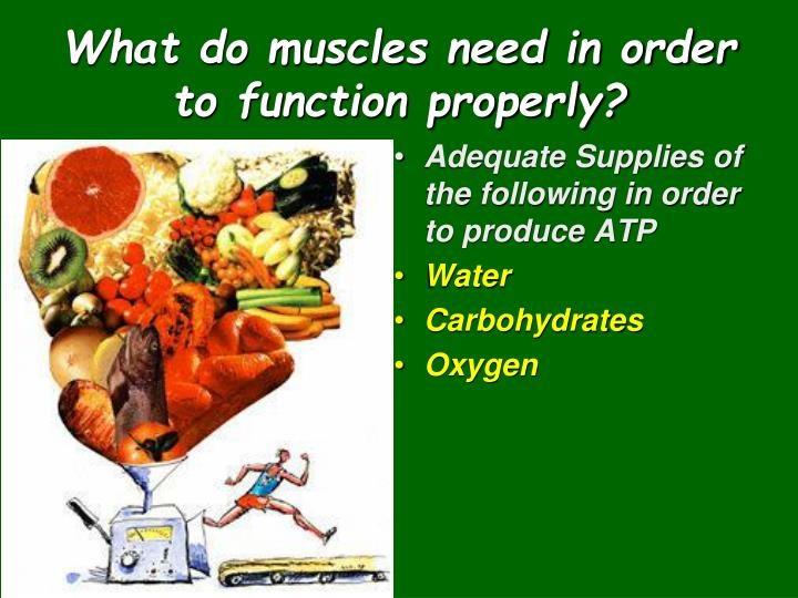 What do muscles need in order to function properly?