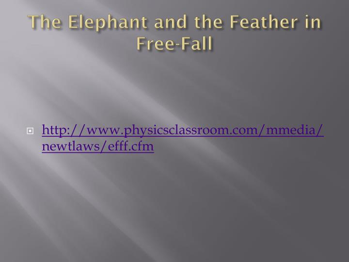 The Elephant and the Feather in Free-Fall