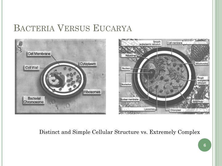 Bacteria Versus Eucarya