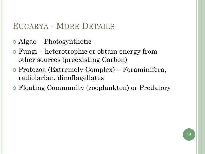 Eucarya - More Details