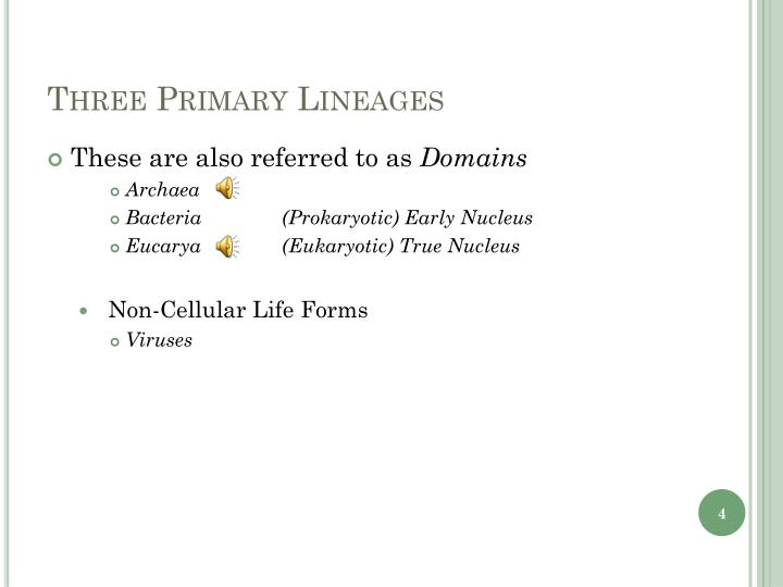 Three Primary Lineages
