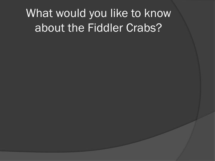 What would you like to know about the Fiddler Crabs?