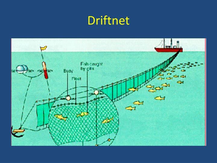 Driftnet