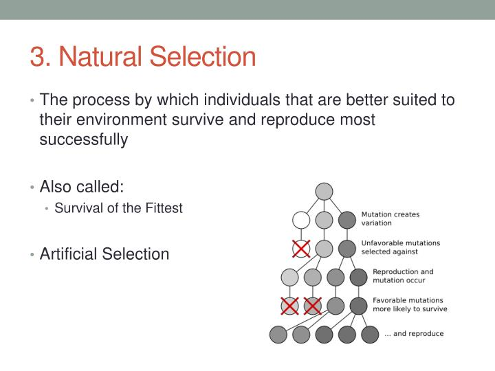 3. Natural Selection