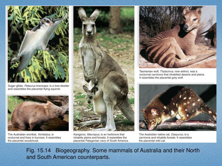 Fig. 15.14   Biogeography. Some mammals of Australia and their North and South American counterparts.