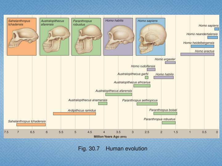 Fig. 30.7    Human evolution