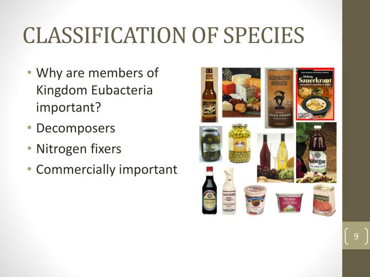 CLASSIFICATION OF SPECIES