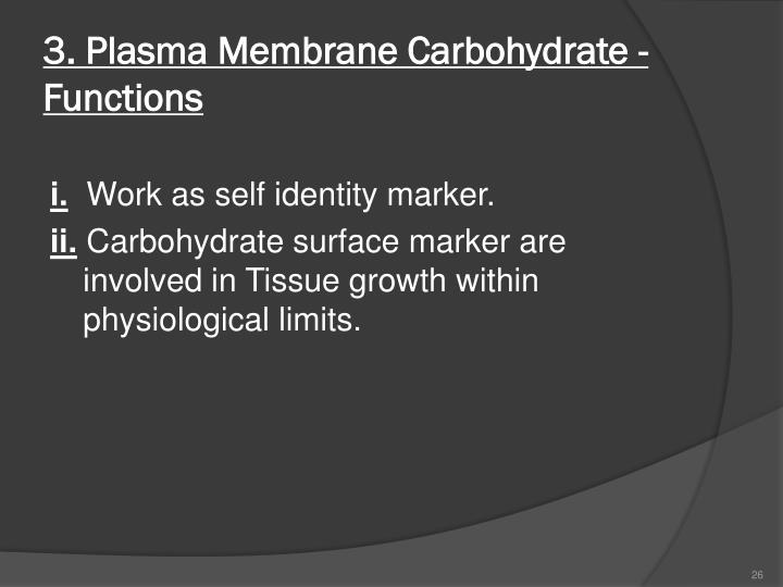 3. Plasma Membrane Carbohydrate - Functions