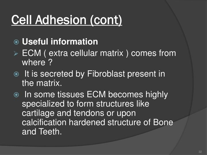 Cell Adhesion (cont)