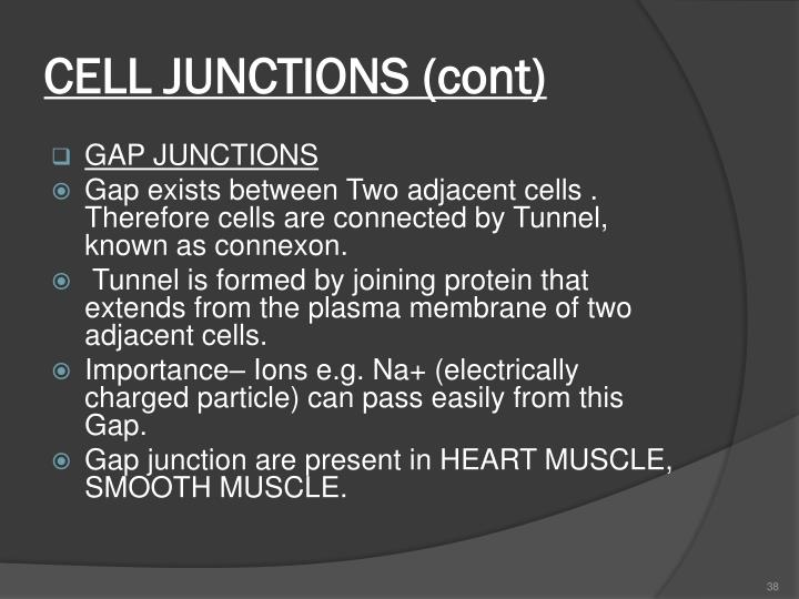 CELL JUNCTIONS (cont)