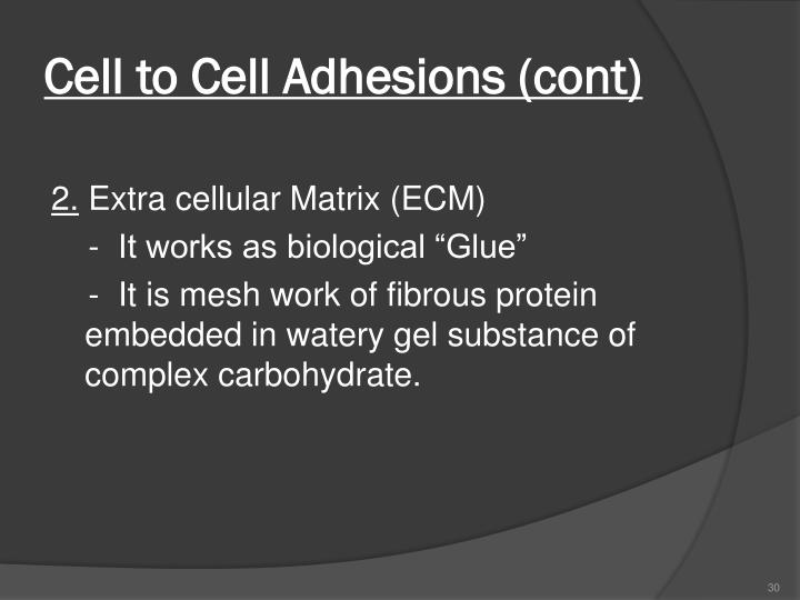 Cell to Cell Adhesions (cont)