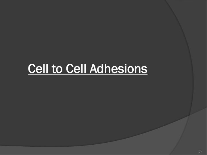 Cell to Cell Adhesions