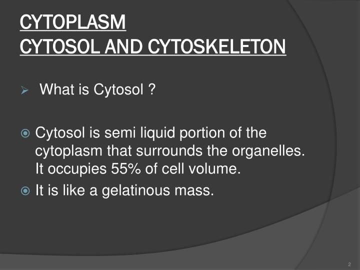 Cytoplasm cytosol and cytoskeleton