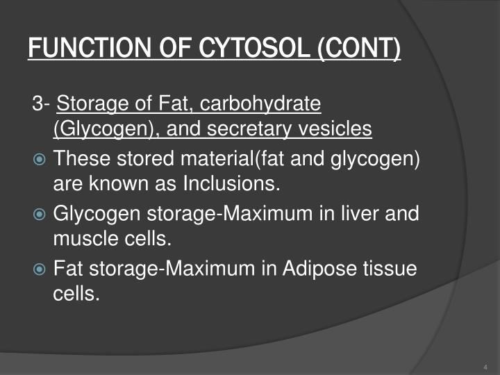 FUNCTION OF CYTOSOL (CONT)