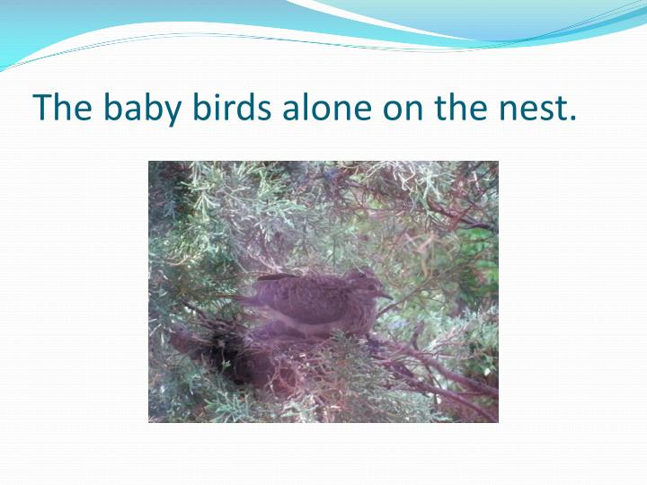 The baby birds alone on the nest.