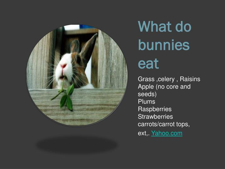 What do bunnies eat