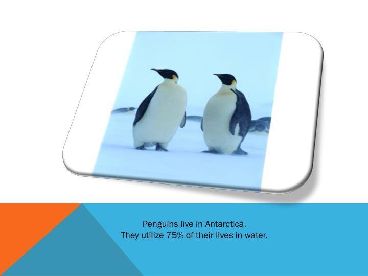 Penguins live in Antarctica.