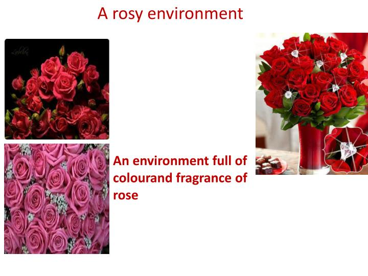 A rosy environment