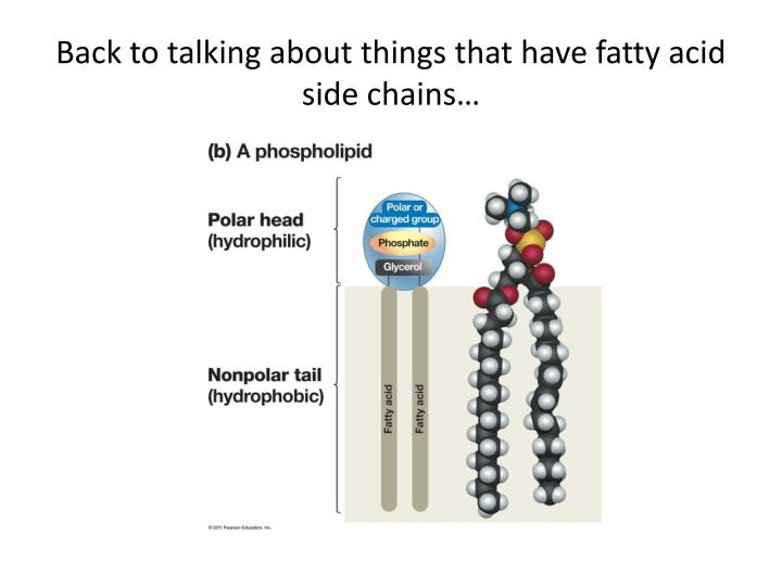 Back to talking about things that have fatty acid side chains…