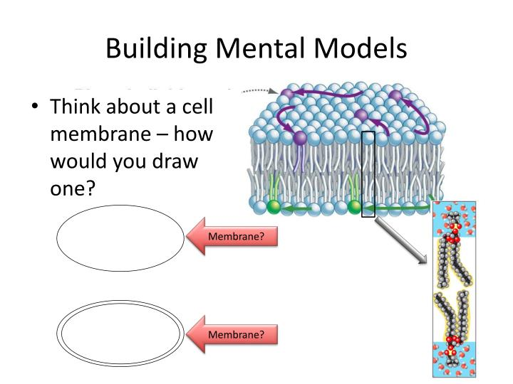 Building Mental Models
