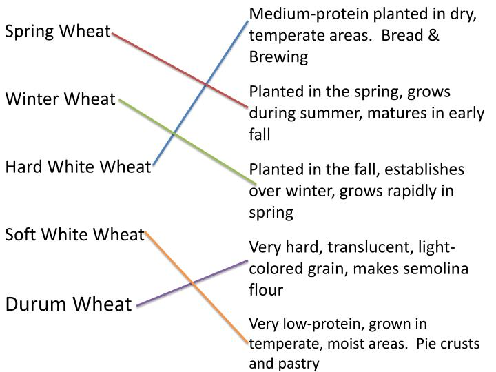 Medium-protein planted in dry, temperate areas.  Bread & Brewing