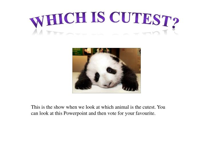Which is cutest?