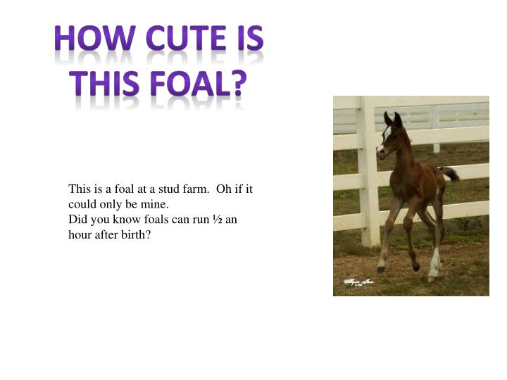 How Cute Is This Foal?