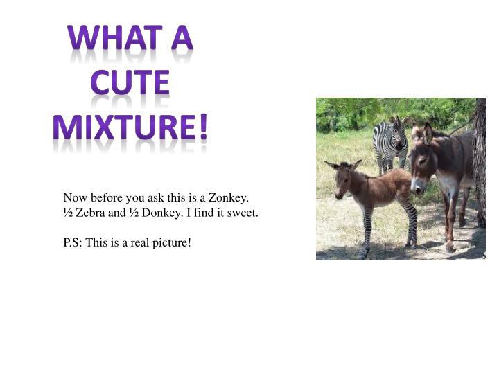 What a cute mixture!