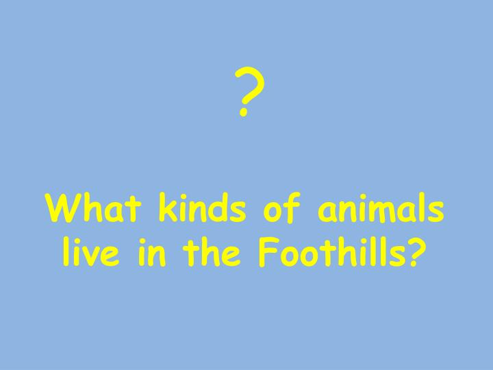 What kinds of animals live in the Foothills?