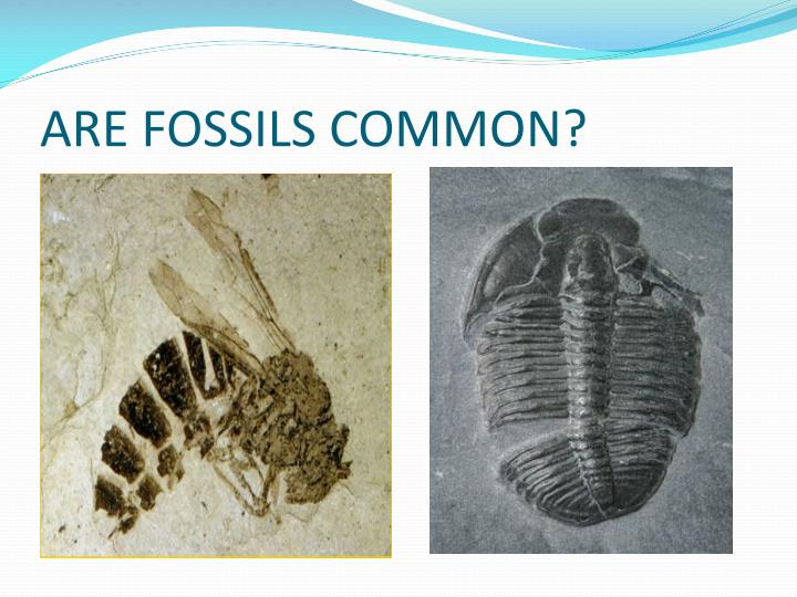 ARE FOSSILS COMMON?