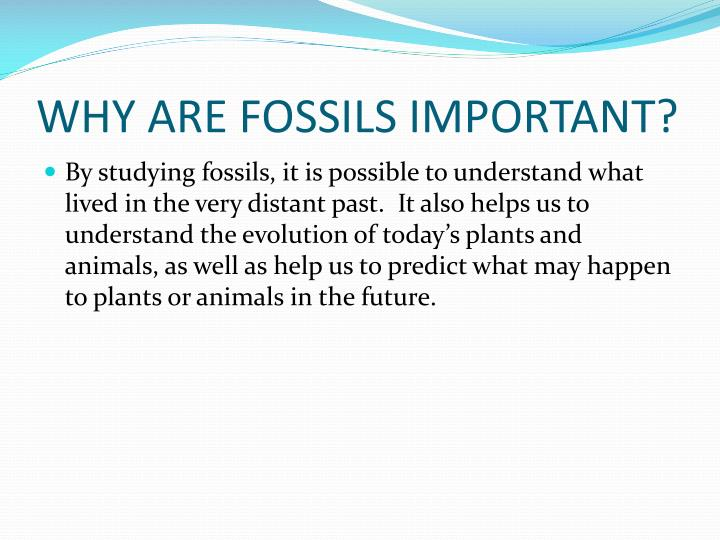 WHY ARE FOSSILS IMPORTANT?
