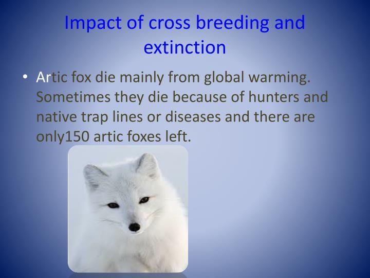 Impact of cross breeding and