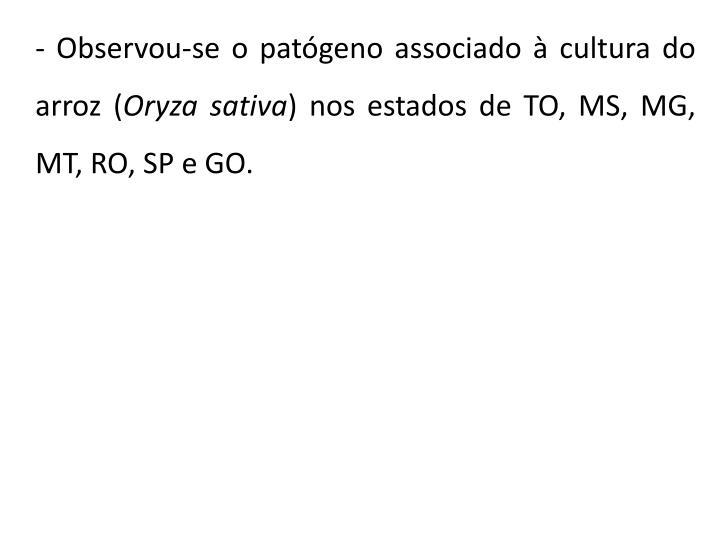 - Observou-se o patógeno associado à cultura do arroz (