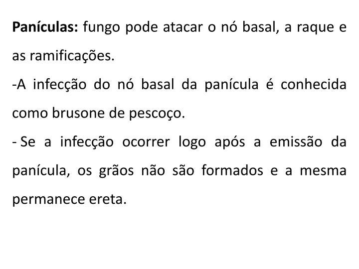 Panículas: